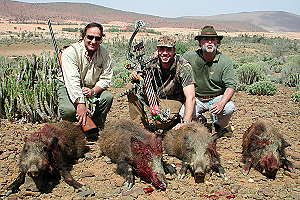 Barbary wild boar take from one driven hunt - Morocco